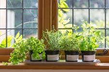 How to Plant an Indoor Veggie Garden| Indoor Gardening, Indoor Garden Ideas, Indoor Gardening Ideas, Herb Gardening, Indoor Gardening, Gardening Ideas #IndoorGardening #IndoorVegetableGardening #IndoorGardeningIdeas
