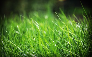 3 Quick Ways to Green Up Your Lawn After Winter  Lawn Care, Lawn Care Ideas, Landscaping Front Yard, Landscape Ideas, Landscaping, Landscaping on a Budget, Landscaping Back Yard #LawnCare #Landscaping, #LandscapeIdeas