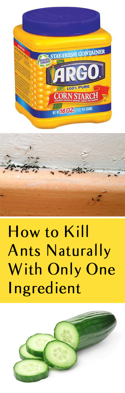 How to Kill Ants Naturally With Only One Ingredient. Kill Ants, How to Kill Ants, Natural Pest Control, Pest Control Hacks, Natural Gardening. #pestcontrol #naturalpestcontrol #gardening #naturalgardening #garden #diygarden