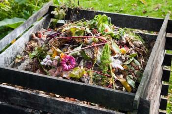 Frugal gardening, frugal gardening tips, gardening hacks, garden, DIY gardening, cheap gardening, easy gardening.