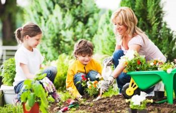 Lazy gardening, lazy gardener tips, popular pin, yard and landscape, yard and landscape ideas, DIY projects, easy DIY, DIY garden, gardening, gardening tips.