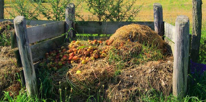 10 Must-Know Composting Tips6