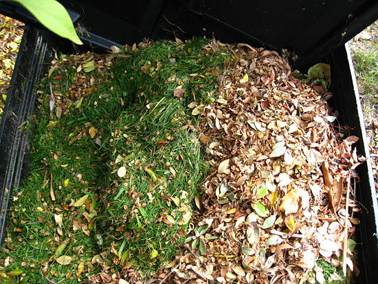 10 Must-Know Composting Tips7
