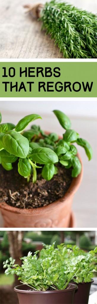 10 Herbs That Regrow (1)