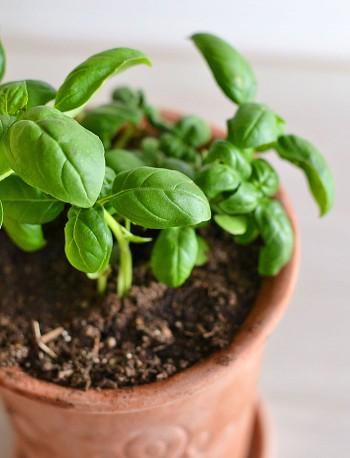 10 Herbs That Regrow