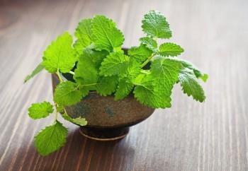 10 Herbs That Regrow4