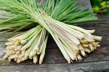 10 Herbs That Regrow8