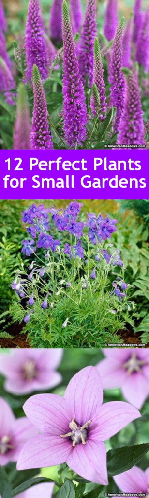 Small gardening, gardening hacks, DIY gardening, small gardening hacks, gardening plants, popular pin, outdoor living, outdoor projects.