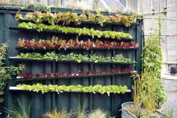 20 Amazing Vertical Gardens19