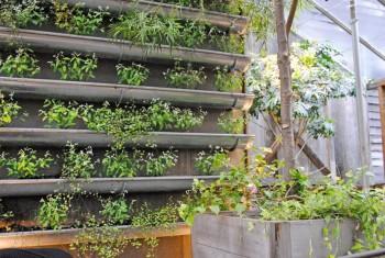 20 Amazing Vertical Gardens5