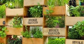 20 Amazing Vertical Gardens8