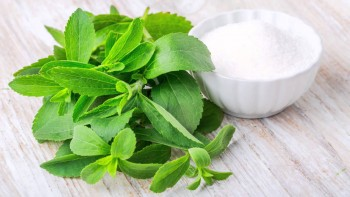 Herbs That Grow In Water - Stevia