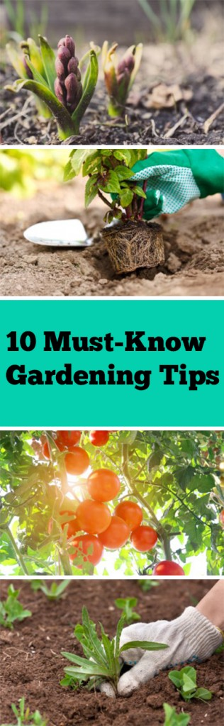 10 Must-Know Gardening Tips