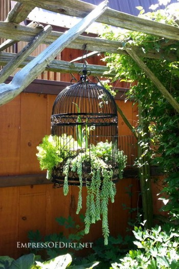 DIY gardening, outdoor living, outdoor gardening hacks, container gardening, DIY container gardening, popular pin, garden, gardening tips and tricks.