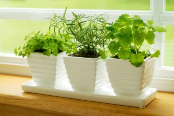 15 Reasons You Should Grow Mint2