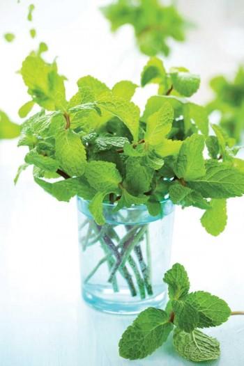 15 Reasons You Should Grow Mint3