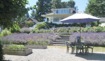 Landscaping, landscaping ideas, landscape hacks, popular pin, DIY landscape, lavender, how to grow lavender, lavender growing tips.