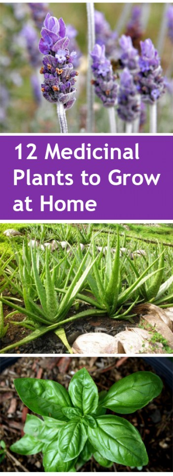 Gardening, home garden, garden hacks, garden tips and tricks, growing plants, gardening DIYs, gardening crafts, popular pin, medicinal gardening