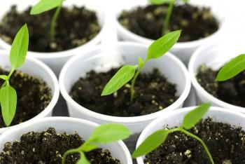 12 Ways Vinegar with Save your Garden11