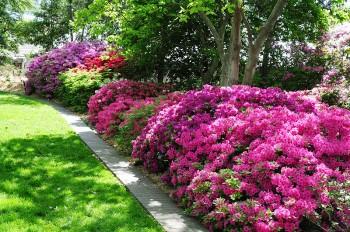 12 Ways Vinegar with Save your Garden3