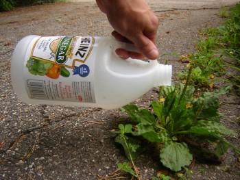 12 Ways Vinegar with Save your Garden4