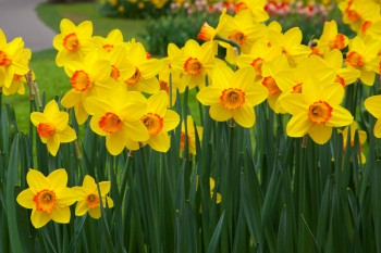 Fall gardening, gardening, fall flowers, cold weather gardening, popular pin, DIY gardening, gardening hacks, gardening tips.