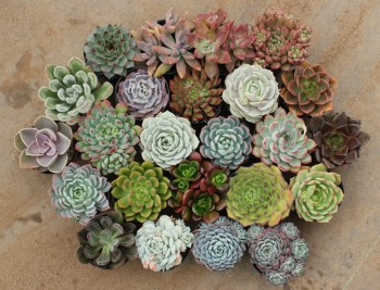 21 Winter Gardening Projects2