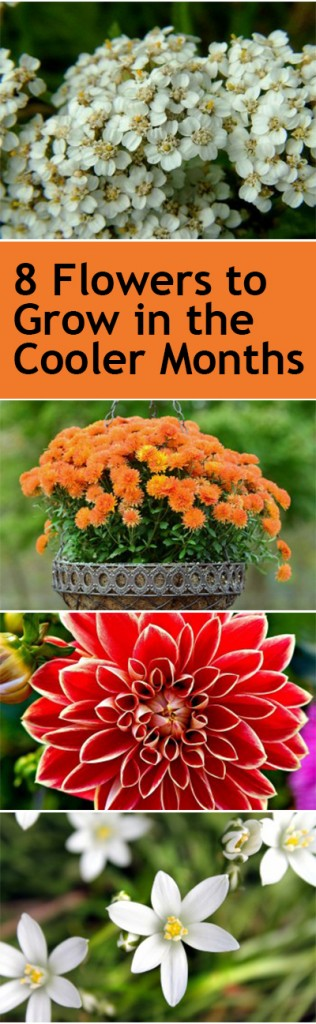 Winter gardening, winter gardening hacks, winter gardening tips, popular pin, fall gardening, flower gardening, flower gardening hacks.