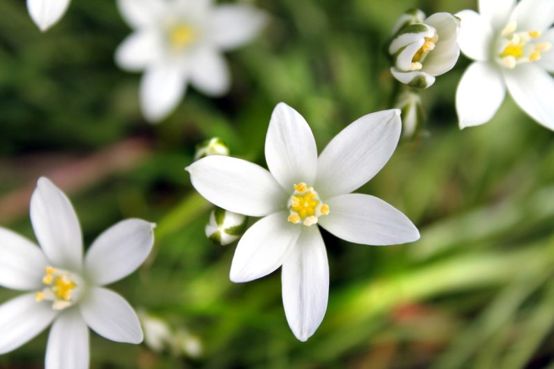 8 Flowers To Grow In The Cooler Months Bless My Weeds