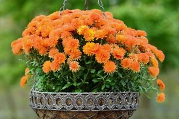 Winter gardening, winter gardening hacks, winter gardening tips, popular pin, fall gardening, flower gardening, flower gardening hacks.