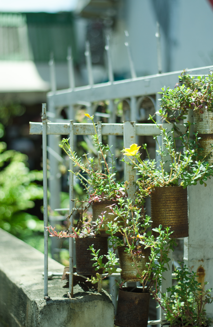 Mount empty tin cans sporadically across your fence. They make awesome planters for a variety of flowers or herbs. Here are some quick and easy ways to decorate your garden fence.