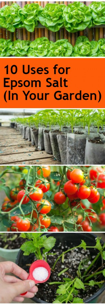 10-uses-for-epsom-salt-in-your-garden