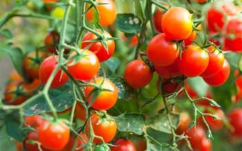10-uses-for-epsom-salt-in-your-garden9