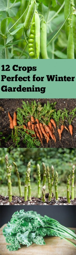 Winter garden, winter gardening, winter gardening hacks, popular pin, gardening, gardening 101, gardening tips and tricks, vegetable garden