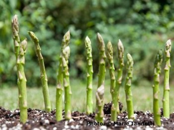 12-crops-perfect-for-winter-gardening7