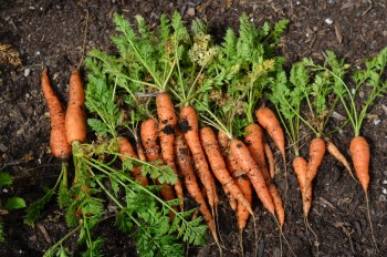 12-crops-perfect-for-winter-gardening9