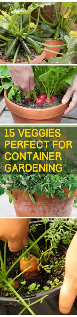 15 Veggies Perfect for Container Gardening Bless My Weeds