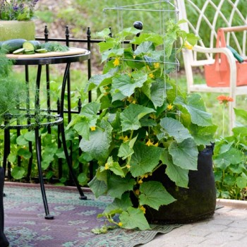 15-veggies-perfect-for-container-gardening12