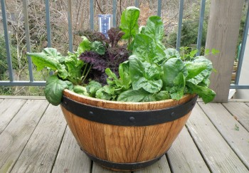 15-veggies-perfect-for-container-gardening7