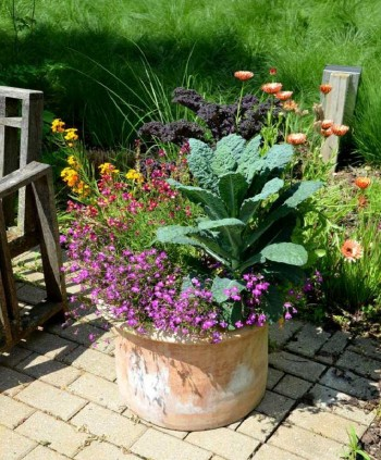 15-veggies-perfect-for-container-gardening8