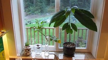 15-veggies-to-grow-indoors-this-winter