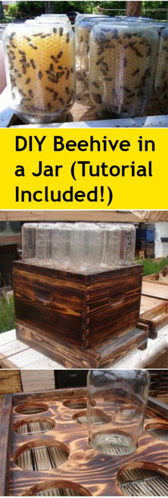 DIY Beehive in a jar, beehive in a jar, gardening, gardening hacks, popular pin, DIY projects, gardening projects, homesteading, save the bees.