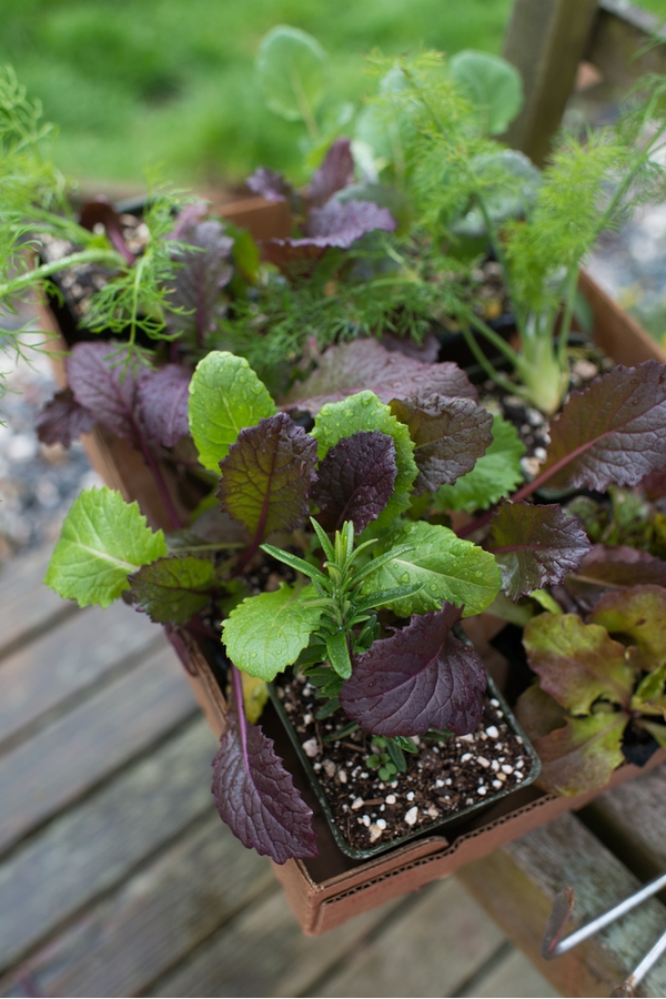 Veggies for Container Gardening