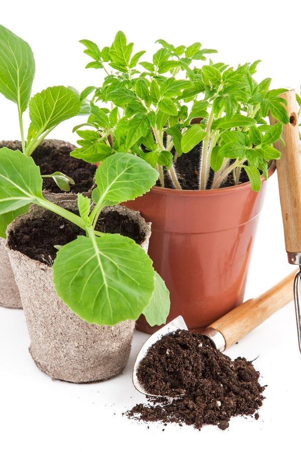 Container gardening veggies