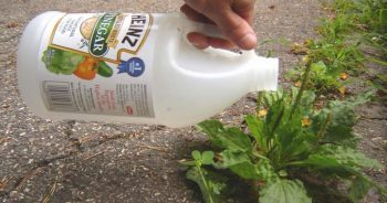 10-ways-to-be-a-chemical-free-garden2