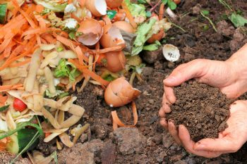 10-ways-to-be-a-chemical-free-garden5