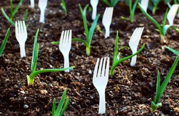 10-ways-to-be-a-chemical-free-garden6