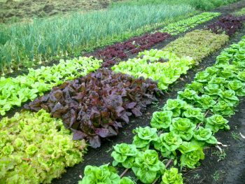 10-ways-to-be-a-chemical-free-garden8