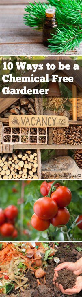 Chemical free gardening, gardening hacks, gardening 101, natural pest control, popular pin, pest control for your garden.