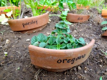 17-totally-free-gardening-tips13